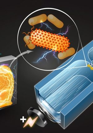 Technique Identifies New Electricity Producing Bacteria