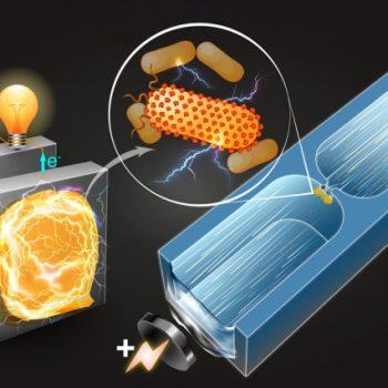 Technique Identifies New Electricity Producing Bacteria